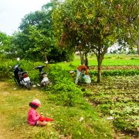 On our way to Phnom Chngok temple, through the hard worked fields.
