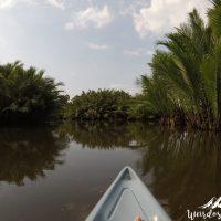 kayaking mangrove kampot cambodia
