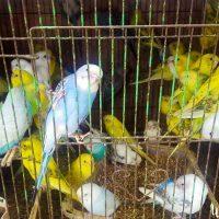 parrots street hue