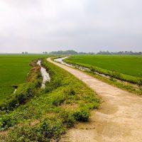 Through rice fields