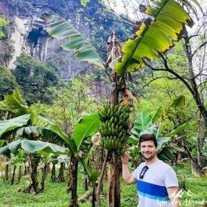 Silviu showing a banana tree, too green