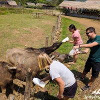 Feeding the buffalo calves was a lot of fun!