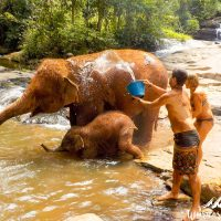 Splashing the elephants