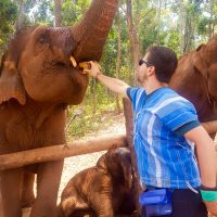 Feeding the elephants straight in the mouth!