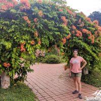 Perine, flowers, classic