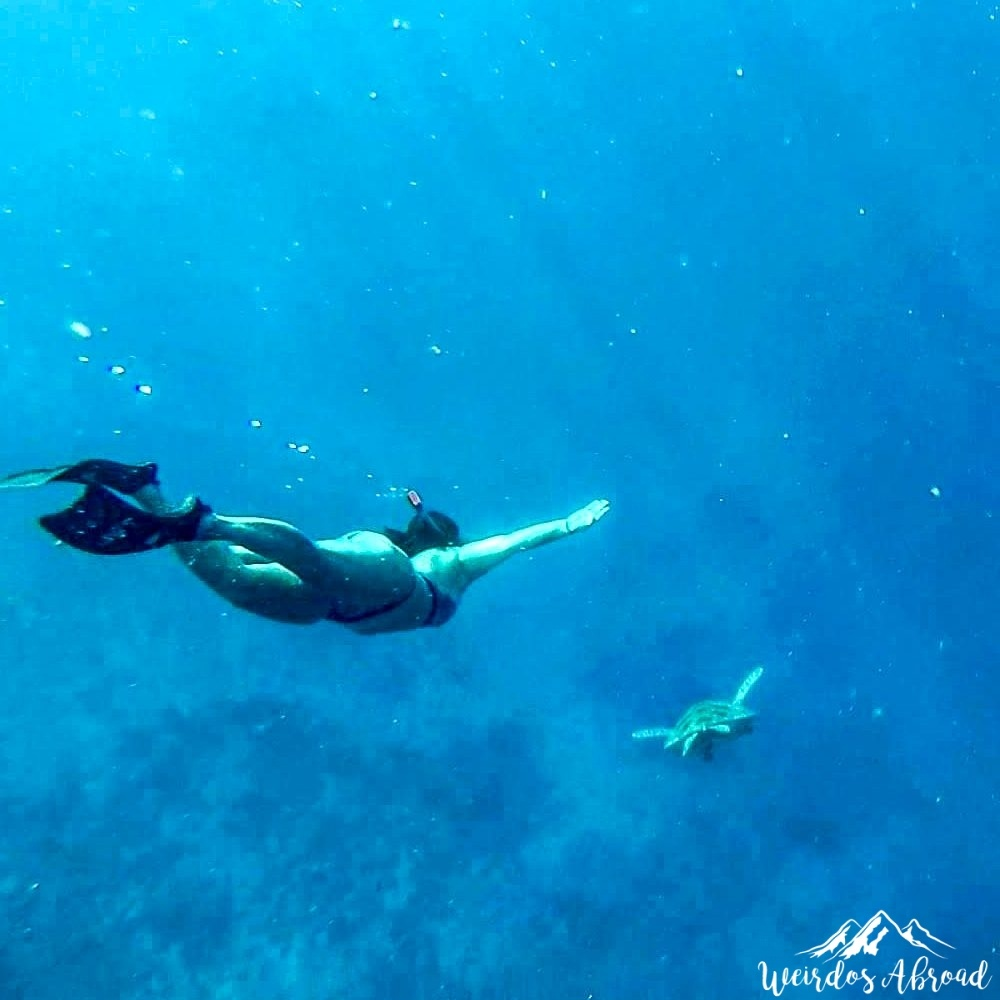 Gili Islands Diving With Turtles Weirdos Abroad