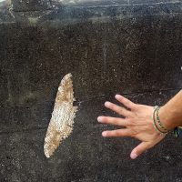 Look at the size of this butterfly!!