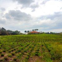 Farm -16