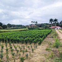 Farm -7