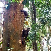 Curious capuchin monkeys!
