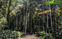 Parque Lage - Rio de Janeiro - enjoying the nature