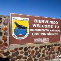 Punta Arenas -21