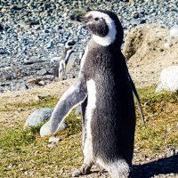Punta Arenas -28