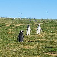 Punta Arenas -29