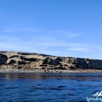The Sea Lion island